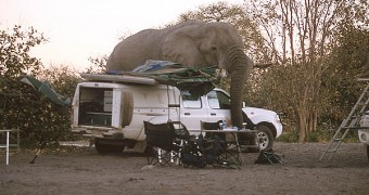 An elephant visiting campers in Africa