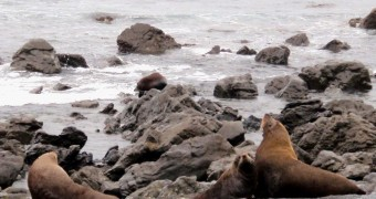 Cape Palliser: A natural habitat of seals