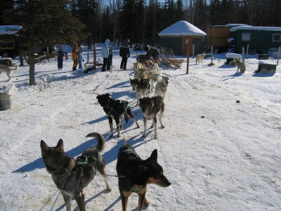 Dog sledding in Alaska. © Mary R