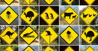 Animal street sign - NZ OZ - VQ