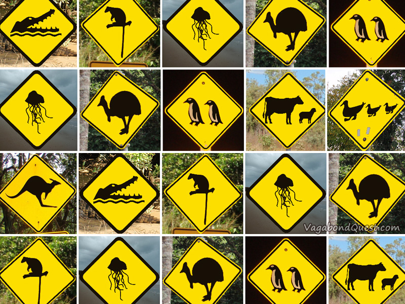 Top 8 Animal Street Signs From Australia And New Zealand