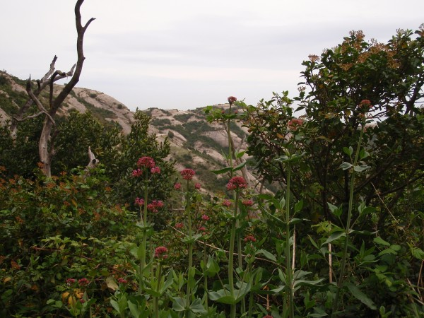 Montserrat flowers and vegetation
