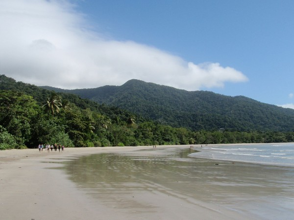 Daintree beach and rainforest