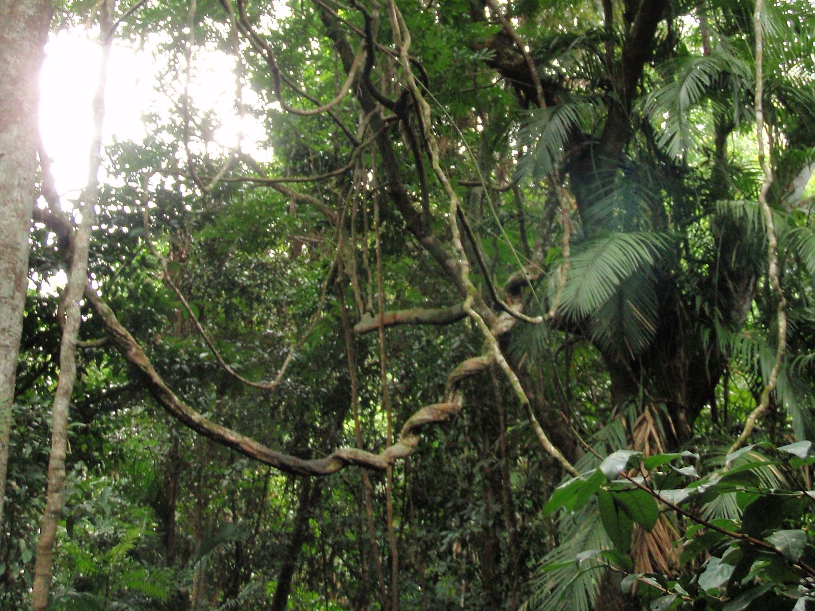 In search of the cassowary vagabond quest for Australian rainforest