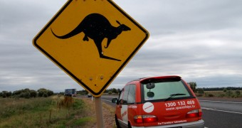 Kangaroo street sign with balls modification