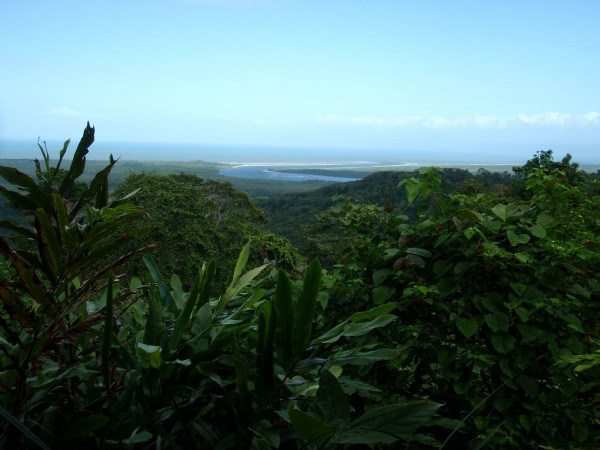 Daintree Forest scenic stop