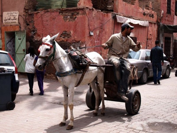 A man with his horse carriage in Medina Quarter of Marrakech, Morocco