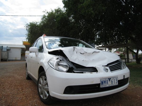 Car vs kangaroo collision (Photo © Go, See, Write)
