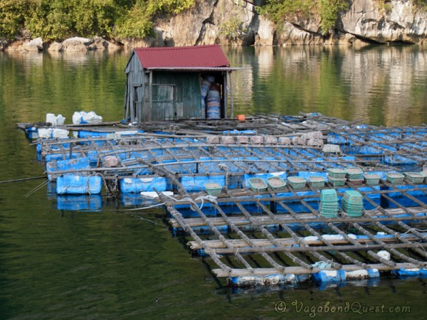 Floating Mussle Farms in Halong Bay