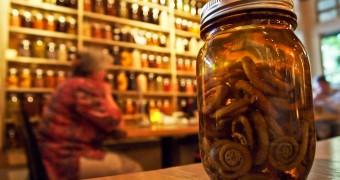 Canada BC Whistler - Alta Bistro - fiddlehead pickles